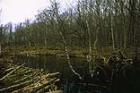Beaver dam - near Green World Center Study Retreat